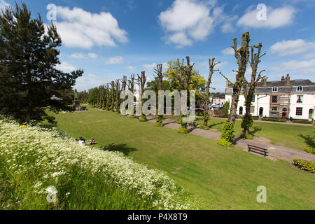 Stadt Canterbury, England. Malerische Sommer Blick auf die Canterbury Dane John Gärten, mit der Lindenallee im Hintergrund. - Stockfoto