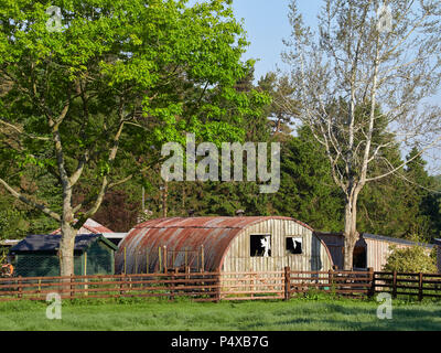Einer verfallenden Nissan Hütte steht durch mehrere Gartenhäuser in einem Garten in der Nähe von gardyne Dorf in Angus auf einen hellen klaren Morgen Sommer im Mai. - Stockfoto