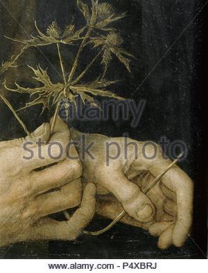 Albrecht Dürer, Selbstporträt, 1493. Detail seiner Hände halten eine Distel. Für die Gesamte finden 40-05 -01/45. Öl auf Papier auf Leinwand, 56,5 x 44,5 cm. R.F. 2382 (auch unter 40-13 -02/4). Autor: Albrecht Dürer (1471-1528). Lage: Louvre, Dpt. des Peintures, Paris, Frankreich. - Stockfoto