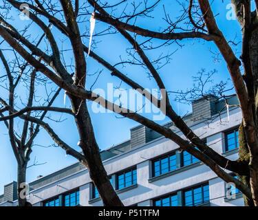 Berlin, Friedrichshain. Eiszapfen hängen auf kahlen Ästen im Winter mit apartment building & blauer Himmel - Stockfoto