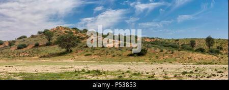 Kalahari grüne Wüste nach der Regenzeit. Kgalagadi Transfrontier Park, Südafrika Wilderness Safari - Stockfoto