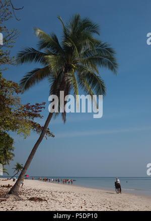 Mann auf Pferd nächste Kokosnuss Baum am Strand, Provinz Prachuap Khiri Khan, Hua Hin, Thailand, Asien. - Stockfoto