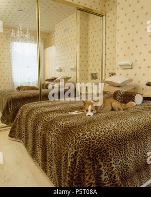 Kleine Hund liegend auf faux leopardskin werfen auf dem Bett im Schlafzimmer mit star Tapeten und eingebauten Kleiderschrank mit Spiegeltüren - Stockfoto