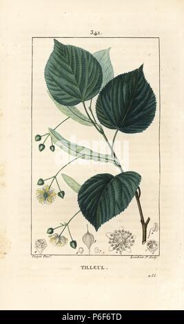 """Lime Tree oder Linde, Tilia europea, mit Blatt, Zweig, Blüte und Saatgut. Papierkörbe Walze Kupferstich von Lambert Junior aus einer Zeichnung von Pierre Jean-Francois Turpin von Chaumeton, Poiret und Chamberet """"La Flore Medicale"""", Paris, Panckoucke, 1830. Turpin (1775~1840) war eine der drei Giganten der Französischen botanische kunst der Ära neben Pierre Joseph Redoute und Pancrace Bessa. - Stockfoto"""
