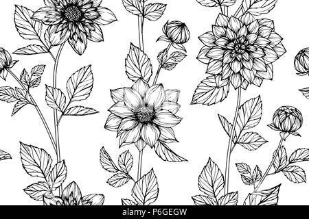 Nahtlose Dahlie Blume Muster Hintergrund. Schwarz und Weiß mit Zeichnung line Art Illustration. - Stockfoto