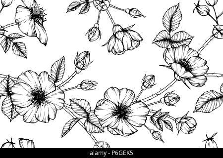 Nahtlose Rosa Canina flower Muster Hintergrund. Schwarz und Weiß mit Zeichnung line Art Illustration. - Stockfoto