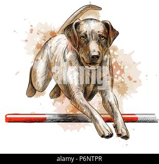 Labrador Retriever springen - Stockfoto