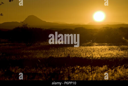 Sonnenuntergang in der Savanne über das Weizenfeld. Am späten Abend Foto schießen in Namibia - Stockfoto