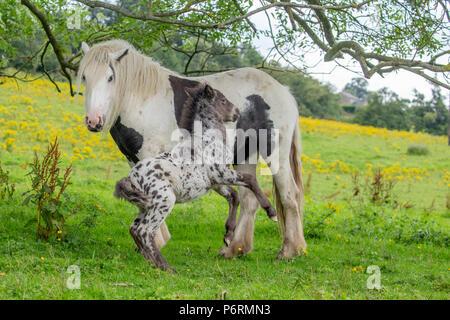 Ein Pferd und Ihr neues Fohlen - Stockfoto