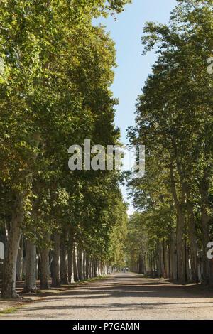 Girona, Region, Katalonien, Nordspanien - Parc de la Devesa, urbanen Parklandschaft mit dem Flugzeug das Pflanzen von Bäumen und Gärten. - Stockfoto