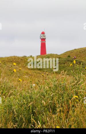 Rote Leuchtturm auf der holländischen Insel Schiermonnikoog, Dünen und Blumen im Vordergrund - Stockfoto