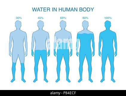 Differenz Anteil Wasser in den menschlichen Körper. - Stockfoto