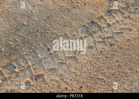 Sand Straße in die Wüste in der Abendsonne mit bremsspuren - Stockfoto