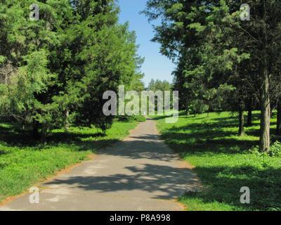 Ein kleiner Weg unter den hohen Bäumen und grünen, grünen Gras. Ich frage mich, wo sie führt. Für ihr Design - Stockfoto