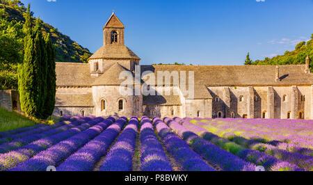Die romanische Zisterzienser Abtei Notre-Dame von Senanque inmitten von blühenden Lavendel-Felder, in der Nähe von Gordes, Provence, Frankreich - Stockfoto