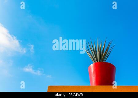 ... Frische Lebendige Tropische Pflanze Blätter Mit Roten Blumen Topf Auf  Einem Bunten Wand Vor Einem Blauen