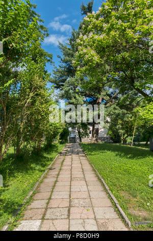 Lane von Steinplatten unter den Pinien mit einem schönen grünen Rasen. Für ihr Design - Stockfoto