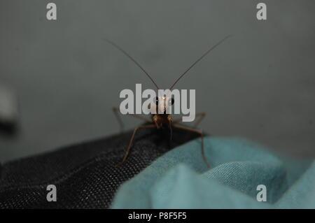 Neugierig Mantis - Stockfoto