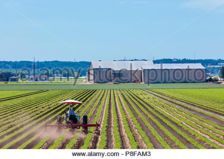 Traktor Anhänger Bodenbearbeitung eine Karotte Anbau in einem Feld in einem Polder Marsh Farm in der Nähe von Bradford Ontario Kanada Holland Marsh - Stockfoto