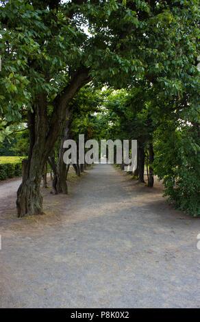 Der Weg gesäumt mit einem hohen Bäumen im Park - Stockfoto