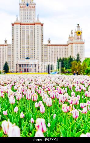 Ansicht der Staatlichen Moskauer Universität mit vielen Blumen im Sommer in Moskau. - Stockfoto