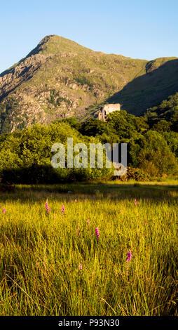 Zum Zeitpunkt der Llywelyn der Großen, im 13. Jahrhundert Dolbadarn Schloss an der Basis der Llanberis Pass in Nordwales wird gebaut. - Stockfoto