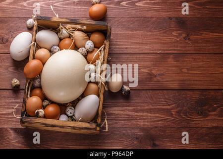 Eier von verschiedenen Vögeln in einer Holzkiste, Copyspace - Stockfoto