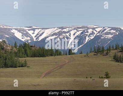 Grüne Lärche auf hügeligem Gelände vor dem Hintergrund der Berge mit Schnee bedeckt. Die Republik Altai, Russland. - Stockfoto