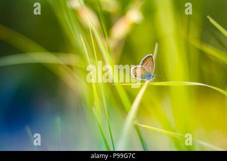Schöne Blumen frischen Frühling Morgen auf Natur und flatternder Schmetterling auf weichen, grünen Hintergrund, Makro. Frühjahr Vorlage, elegant - Stockfoto