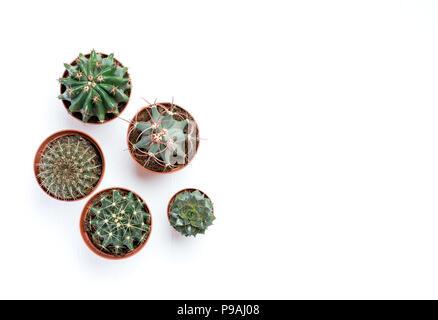 Sukkulenten, Kakteen auf weißem Hintergrund Holz, Transplantation, Gartenarbeit, Hobby - Stockfoto