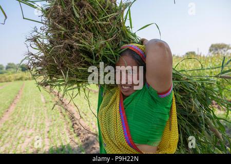 Ein Bauer Ernte auf ihrer Farm in Ahmedabad, Indien. - Stockfoto