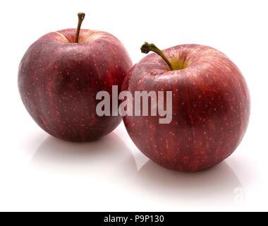 Zwei Gala Äpfel isoliert auf weißem Hintergrund - Stockfoto