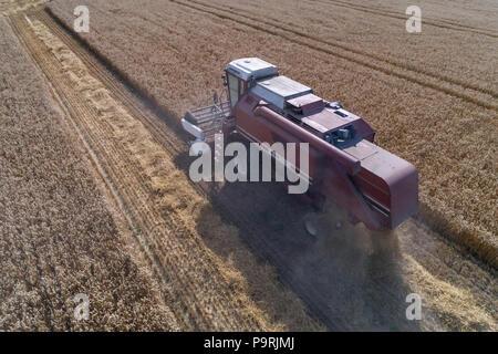 Luftaufnahme auf dem Mähdrescher arbeiten auf der großen Weizenfeld in Deutschland - Stockfoto