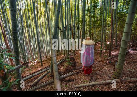 Kumano Kodo Pilgerweg. Daimon-zaka Hang. Bambus Bäume. Präfektur Wakayama. Kii Halbinsel. Kansai Region. Honshü Insel. UNESCO. Japan - Stockfoto