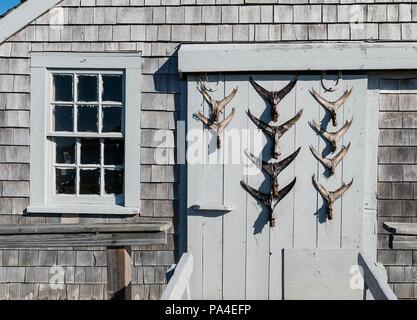 Rustikale Hütte mit Fish Tail Darstellung an der Tür, Chatham, Cape Cod, Massachusetts, USA - Stockfoto