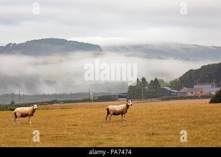 Flintshire, Wales, 21. Juli 2018. UK Wetter: Nach einer Atempause von der Hitzewelle mit Regen für einige gestern Teilen des Vereinigten Königreichs mit einem feuchten misty morning. Nebel Ackerland mit der Clwydian Hügel in der Ferne, in der Nähe vom Dorf von moel-y-Crio, Flintshire, Wales - © DGDImages/AlamyNews - Stockfoto
