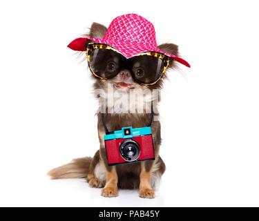 Chihuahua Hund suchen so cool mit Sonnenbrille und Foto Kamera bereit für Sommerferien - Stockfoto