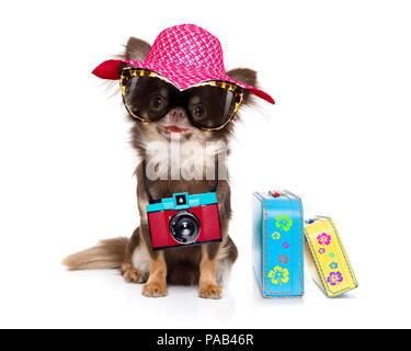 Chihuahua Hund suchen so cool mit Sonnenbrille und Foto Kamera bereit für den Sommer Urlaub, mit dem Gepäck auf weißem Hintergrund isoliert - Stockfoto