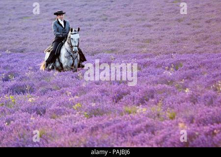 Frau in traditioneller Tracht reiten ein Andalusisches Pferd durch ein Feld von Lavendel im Hop Farm, Darent Tal, Kent, Großbritannien. - Stockfoto