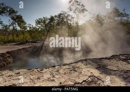 Papua Neu Guinea, Dei Dei heißen Quellen, Fergusson Island. Dampf steigt durch Bäume aus heißen Quellen unten. - Stockfoto