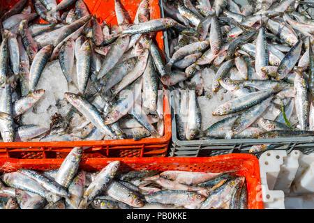 Fisch am Marktstand, Markt von Chefchaouen, Chaouen, Tangier-Tétouan, Königreich Marokko Stockfoto