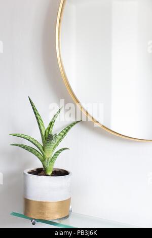 Eine saftige (Aloe Vera) Pflanze in einem Topf neben einem runden goldgerahmte Spiegel - Stockfoto