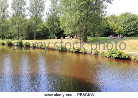 Die Leute Spaß haben auf dem Gras beim Huddersfield Canal an Diggle, Saddleworth, Oldham GROSSBRITANNIEN. Sommer Juli 2018 - Stockfoto