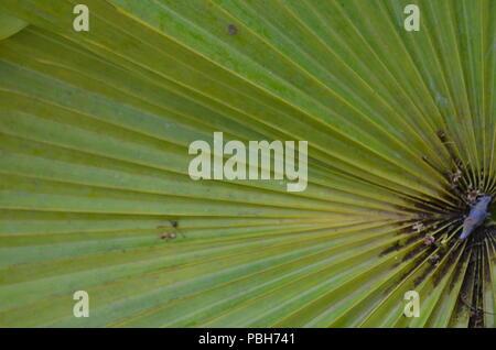 Zeilen in Palm Blätter - Stockfoto