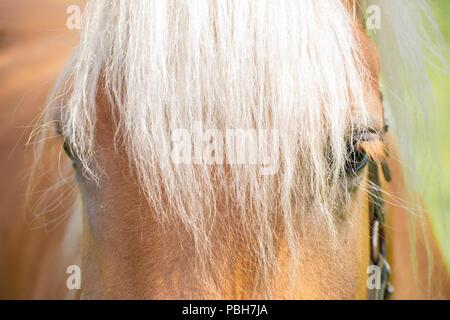 Horse Portrait - Stockfoto