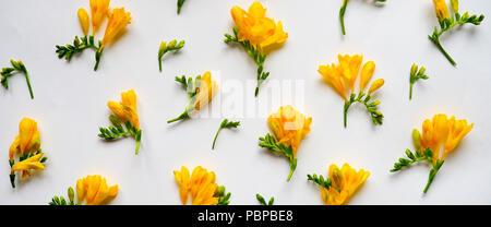 Blumen Komposition. Rahmen aus getrockneten gelben Blumen auf weißem Hintergrund. Flach, Ansicht von oben. - Stockfoto
