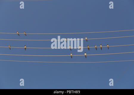 Gruppe der Schwalben sitzen auf Drähte gegen den blauen Himmel ...