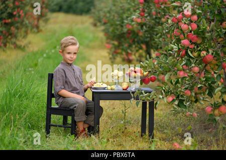 Wenig, fünf Jahre alt, junge hilft bei der Erfassung und der Ernte von Äpfeln aus Apple Tree, Herbst Zeit. Kind pflücken Äpfel auf Bauernhof im Herbst. - Stockfoto