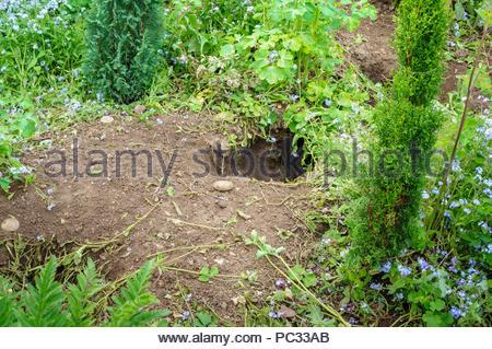 Fox Schäden Grenze zum Garten - Stockfoto