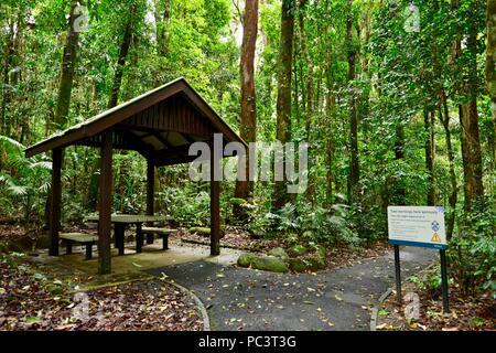 Ein Picknick auf der Wanderung zu Josephine Falls, Bartle Frere, QLD, Australien - Stockfoto